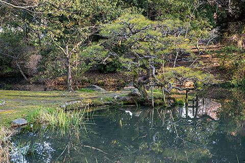 松井神社 茶庭